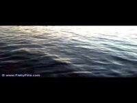 FishyFins Forecast mrwiffle Daniels Deceivers